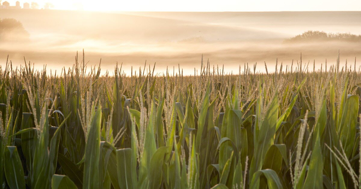 Futures: All Eyes On This Week's Crop Report